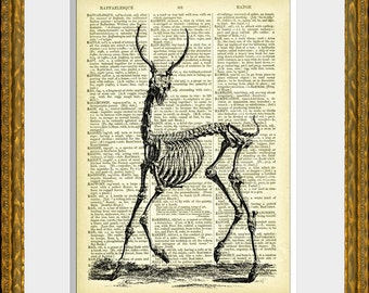 DEER SKELETON recycled book page art print - an antique dictionary page with a retooled illustration - upcycled vintage charm