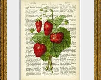 STRAWBERRIES dictionary art print - an antique dictionary page with a retooled antique fruit illustration - upcycled kitchen vintage print