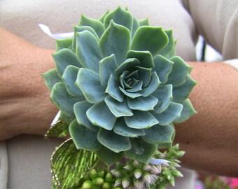 Large Succulent Corsage