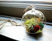 Mini Hanging Air Plant Terrarium with Painted Balsa Wood Flowers (4 inch diameter)