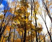 Fall Tree Tops Fine Print