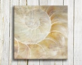 "Sea shell. Canvas art. 12""/12"". 30/30 cm. - OneDesign4U"