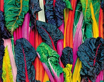 Five Color Silverbeet Australian Heirloom Swiss Chard Seeds Non GMO Naturally Grown Open Pollinated