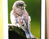 Cards:  WordyBird-F (Thinking of You--note cards, featuring the Eastern Bluebird)