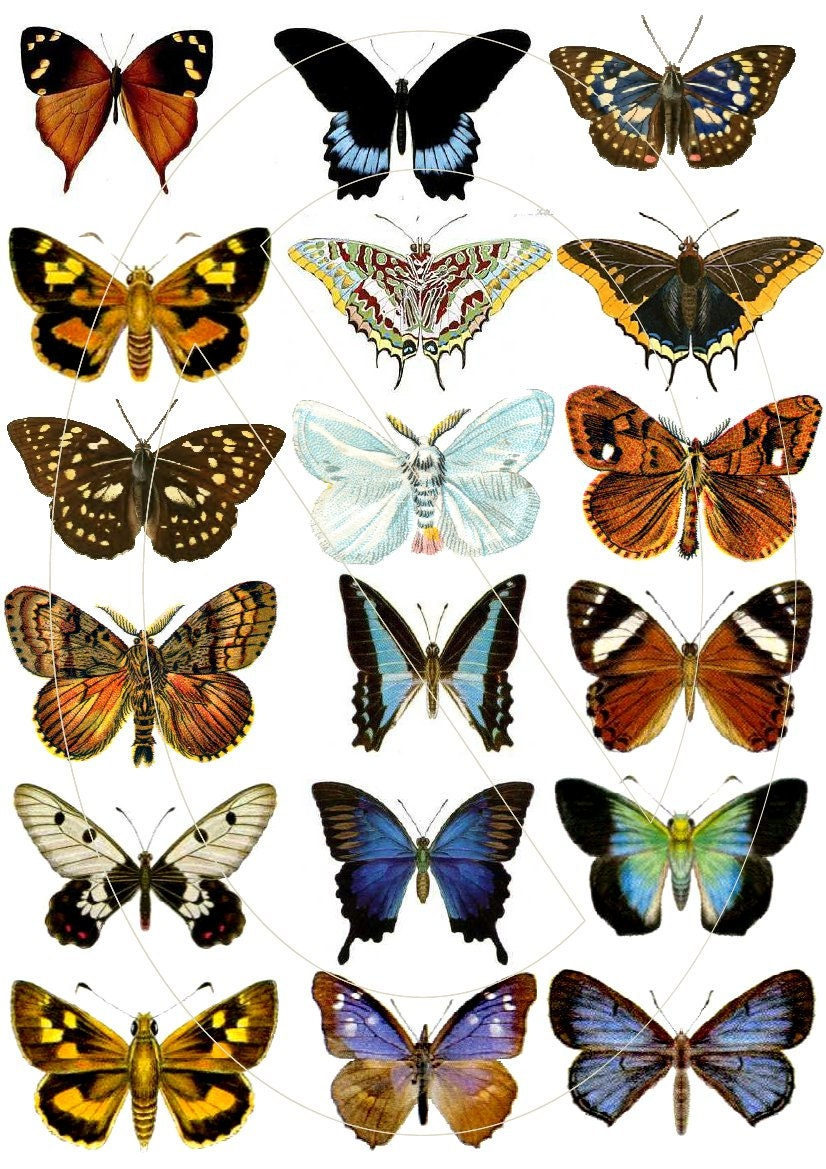 Resource image inside printable butterfly