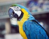 Parrot, Baluarte Zoo, Ilocos Norte, Philippines 8x10 Digital Photographic Print
