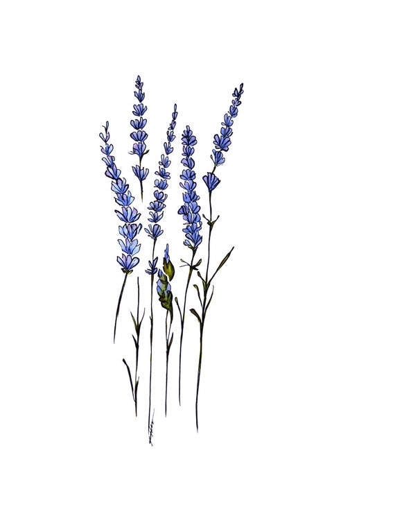 """Lavender 4x6"""" print"""