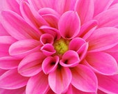 Hot Pink Flower Photography, dahlia photo, girl nursery wall art, nature photography, floral decor