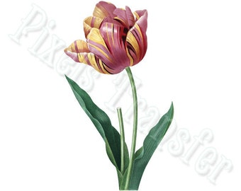 TULIP Instant Download large Digital Image in color, vintage illustration clipart pink flower tulip REDOUTE 005