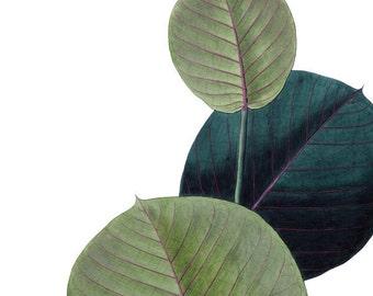 Botanical print digital MANIHOT Instant Download Large Digital Image, Pixels Transfer, green plant for decoupage 050