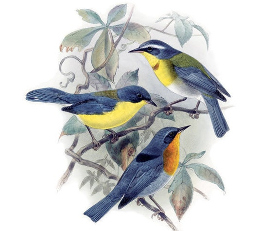 BIRDS Instant Download, birds clipart wedding image vintage illustration 046