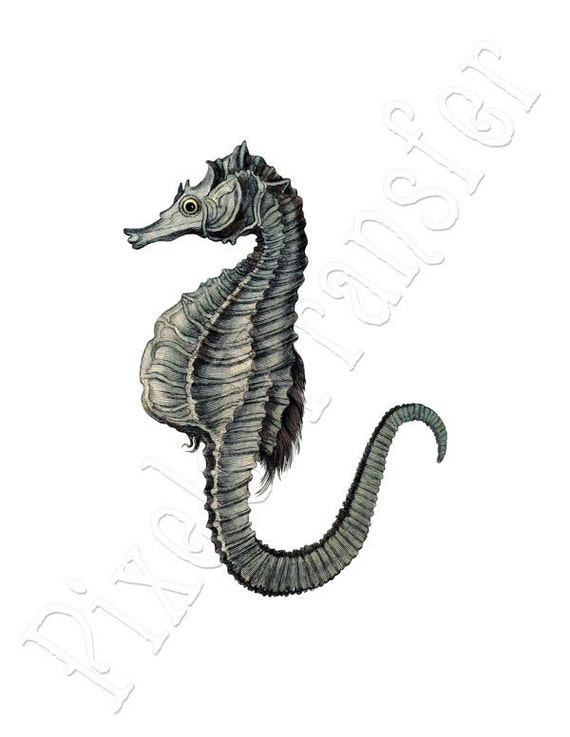 SEA HORSE Instant Download digital image, green shell vintage illustration 083