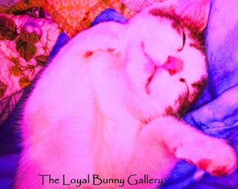 Rosy Dawn Kitten var. Sweet Oblivion Altered Photo JPG FIle or Fine Art Print