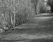 Country Tree Lined Path Photograph, Woodland France, 12 x 8 Black and White