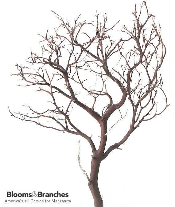 Natural Red Manzanita Branch, 24 inches tall