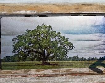 Lone Tree-Fine Art Photograph on 10x20 Metal
