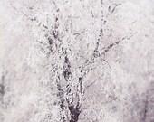 winter wonderland - dreamy art - surreal wall art - tree art print - home decor - modern wall art