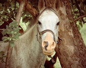 "Photography PRINT - You Missed A Spot - 8"" x 10"" Print - Animal Horse Photography - Fine Art Travel Photography"