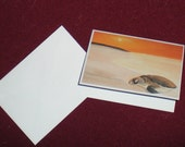 Pack of 3 Sea Turtle at Dawn Notecards and Envelopes
