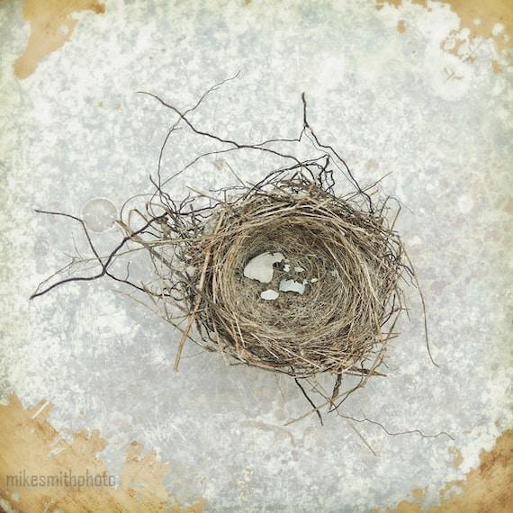 Shabby Cottage Chic Nest Prints Home Decor Wall Art ~ Birds nest photo print shabby chic vintage by mikesmithphoto