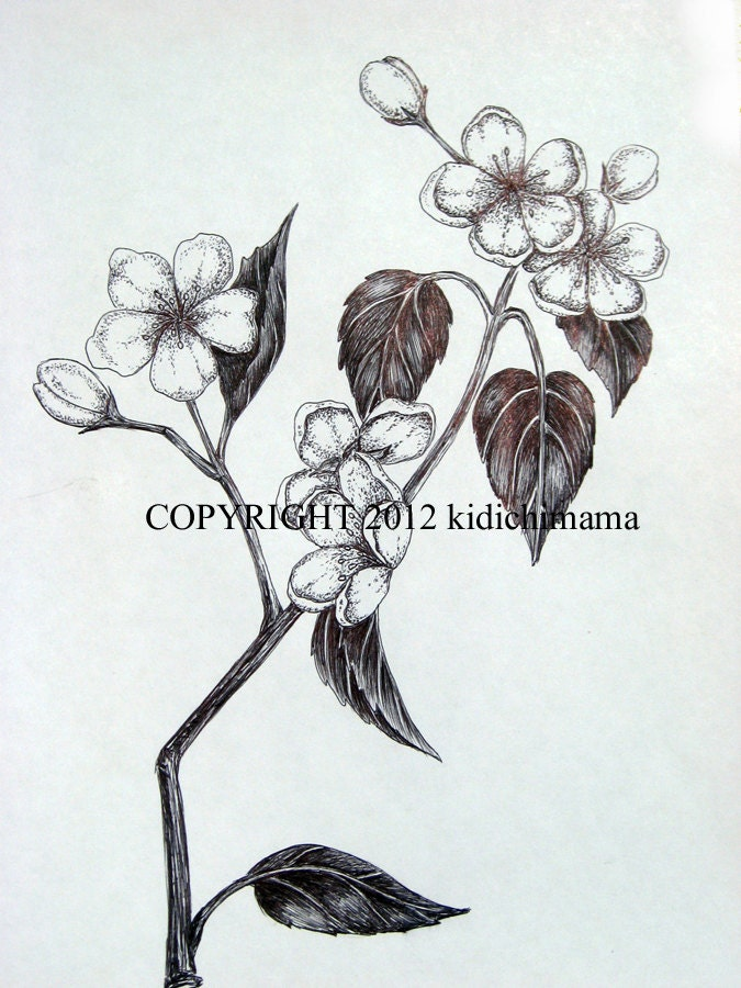 Blossom Flower Line Drawing : Original pen and ink cherry blossom flower drawing by