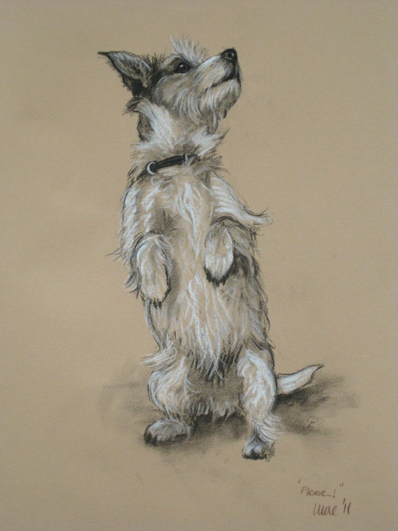 Terrier dog canine limited edition fine art dog art print 'Please' from an original chalk and charcoal sketch by artist H Irvine