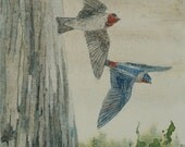 Cliff Swallows Original Painting