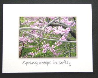 Spring creeps in softly