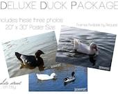 Deluxe Duck Package