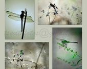Dragonfly portraits - Dragonfly photography - Set of four 5x7 dragonfly prints
