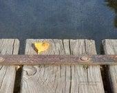 6x8 Yellow leaf on wooden bridge    - home decor print - lakeside- fall decor