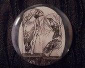 Birds in Bell Jar