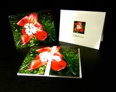 Red Open Tulip Greeting Cards (4pk)