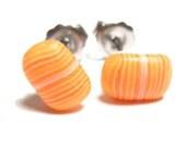Mini Sushi stud earrings (Salmon Nigiri)