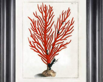 CORAL PRINT Ellis 8x10 Art Print 6 Beautiful Antique Sea Ocean Red Coral Nature to Frame Home Decoration Wall Hanging