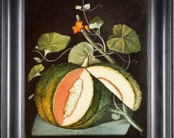 FRUIT PRINT Melon 8X10 Botanical Art Print 11 Antique Brookshaw Beautiful Colored Plant with Yellow Flowers Nature Home Decor