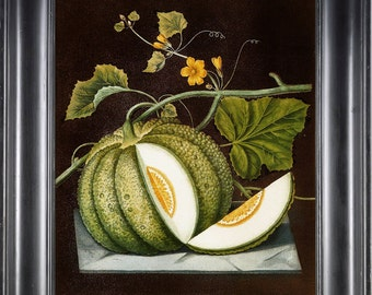 FRUIT PRINT Melon 8X10 Botanical Art Print 12 Antique Brookshaw Beautiful Green Blooming Flowers Plant Interior Design