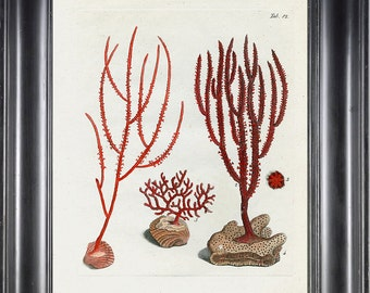 CORAL PRINT Ellis 8x10 Art Print 21 Beautiful Antique Sea Ocean Red Coral Nature to Frame Home Decoration Wall Hanging