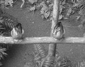 "Signed Art ""Sitting Ducks"" 8x10 B&W  framed photograph."