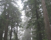 Looking Up: The Redwood National Forest