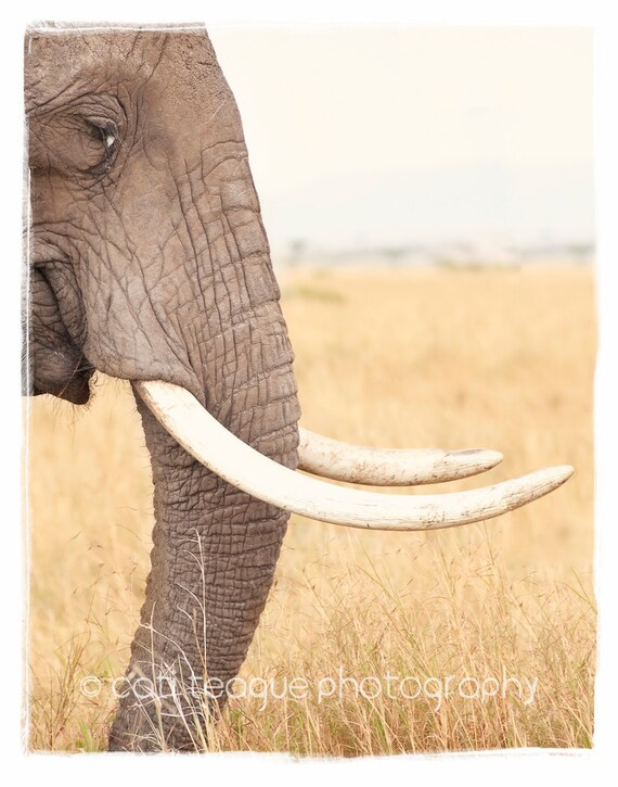 Wrinkles - African Elephant photograph in 11x14 mat