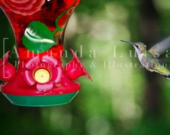 Hummingbird Nature Fine Art Photography Print Wall Art