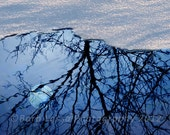 Moon, Reflection, Winter, Trees, Abstract, Photography, Fine Art, Barb Lassa, print