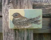 Common Nighthawk, Watercolor and colored pencil on pine panel. Original woodland creature painting by Kat Wedmore.