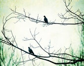 Photography - Mourning Doves Trees Silhouette Green Grunge 8x10