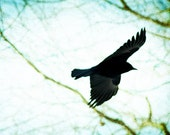 Photography - Soaring Crow Photo Print in Shades of Blue & Green Silhouette Textured