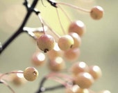tireless   8X10  berries,crabapples,nature,tree,decor