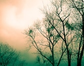 Enchanted Forest Digital Download Photography Bare Branches Printable Art  forest picture salmon peach green whimsical photo print