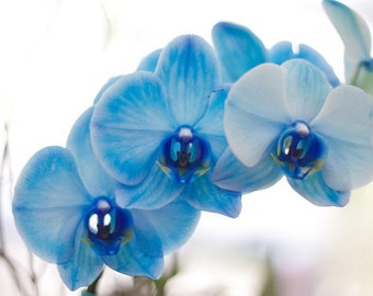 Blue Orchids photograph Digital Download Photography flower photo print blue wall art