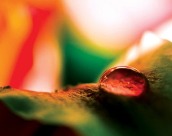 Droplet Photograph Instant Download tangerine orange water drop abstract red green yellow print fine art photography wall art